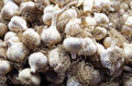 Rustic garlic cloves and roots pile Royalty Free Stock Photo