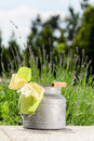 Rustic milk can Royalty Free Stock Photo