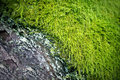 Rustic Old Bark & Green Moss Royalty Free Stock Image
