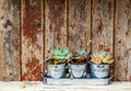 Rustic plants three in pots placed on a old wooden cabinet Royalty Free Stock Images