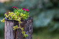 Rustic pot of flowers Royalty Free Stock Photo
