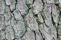 Rustic Tree Bark Texture Two