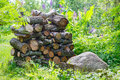 Rustic woodpile of firewood on the background of plants Royalty Free Stock Photo