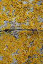 Rusty barbed wire on concrete porosgem yellow moss moss grown c and pillar covered with and Stock Image