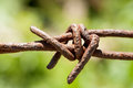 Rusty barbed wire on green background closeup blurry Stock Image