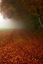 Rusty golden leaves and morning fog Royalty Free Stock Photo
