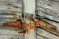 Rusty hinge an old on a shed Royalty Free Stock Images