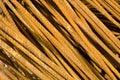 Rusty iron rods closeup Royalty Free Stock Photo