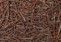 Rusty nails. Stock Image