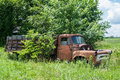Rusty old farm truck a overgrown with weeds and trees Stock Photo