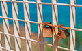 Rusty padlocks on a metal railing by the sea Stock Photography