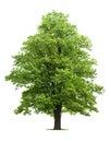 Árvore de bordo Imagens de Stock