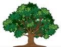Árvore de carvalho do vetor Fotos de Stock