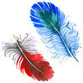 RWatercolor bird feather from wing isolated.