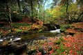 Rydal beck autumn on and woods Stock Photography