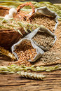 Rye barley and wheat are the basis for good bread on old wooden table Royalty Free Stock Photography