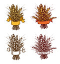 Rye wheat sheaf of or on white eps jpg include path Stock Image