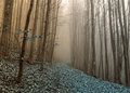 Rythem and blues in foggy forest Royalty Free Stock Photo