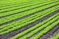 αγρότης s συγκομιδών Στοκ φωτογραφία με δικαίωμα ελεύθερης χρήσης