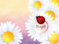 It s a girl ladybird on daisy for the child Royalty Free Stock Image