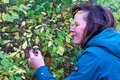 Picking sloes in Denaby Ings 3, Doncaster, England. Royalty Free Stock Photo