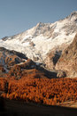Saas fee forest autumn Royalty Free Stock Photo