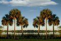 Sable Palms Stock Photography