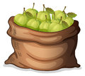 A sack of guavas illustration on white background Royalty Free Stock Image