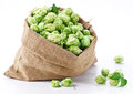 Sack of hops Royalty Free Stock Photography