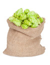 Sack of hops Stock Image