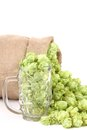 Sack and mug with hop isolated on a white background Stock Photos
