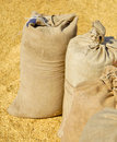 Sacks with wheat harvest Royalty Free Stock Photography