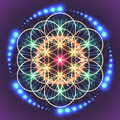 Sacred Geometry Flower of Life Royalty Free Stock Photo