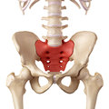The sacrum medical accurate illustration of Stock Photos