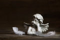 Sad angel with white feathers on a dark background for bereaveme wooden bereavement Stock Image