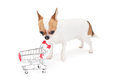 Sad chihuahua with empty shopping cart on the white background in the studio Stock Image
