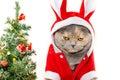 Sad Christmas cat Royalty Free Stock Photo