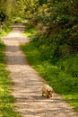 Sad dog alone country path Stock Photo