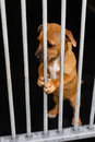 Sad dog in a cage behind bars Royalty Free Stock Photos