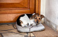 Sad dog with iron chain sitting on his cushion outside the door Royalty Free Stock Images