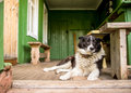 Sad dog is missing alone sitting on the porch of a country house Royalty Free Stock Photography