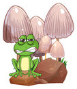 A sad frog near the mushrooms illustration of on white background Royalty Free Stock Image