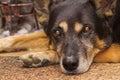 Sad gaze of a dog Royalty Free Stock Photo