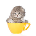 Sad kitten in large cup. isolated on white background Royalty Free Stock Photo