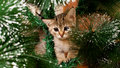 Sad kitten on a new year tree fi Stock Photo