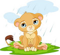 Sad lion cub Stock Photography