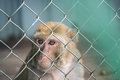 Sad monkey sitting behind bars in city zoo Royalty Free Stock Photos