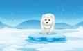 A sad polar bear standing above the iceberg