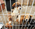 Sad puppies shelter five little behind bars in a dogs one is leaning on the fence Stock Images