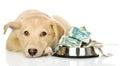 Sad puppy needing the help isolated on white background Stock Photos